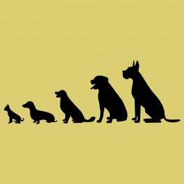 Kutyák szépen sorban